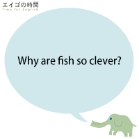 Why are fish so clever?